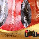صادرات انواع چرم شترمرغ مرغوب ایران